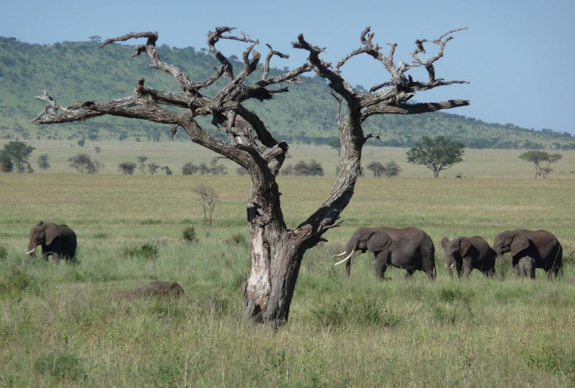 Africa_Tanzania_Serengeti_Elephants_Ryan-Droegemueller_blog