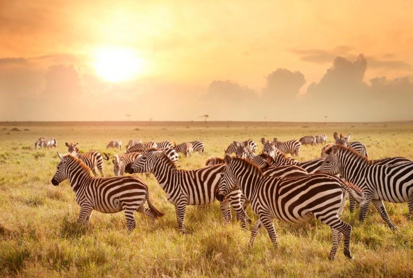 Africa_Kenya_Maasai-Mara_Zebras_Sunset